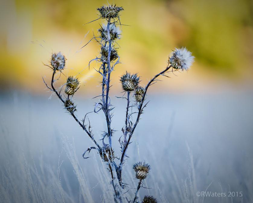 Weeds Have Feelings Too