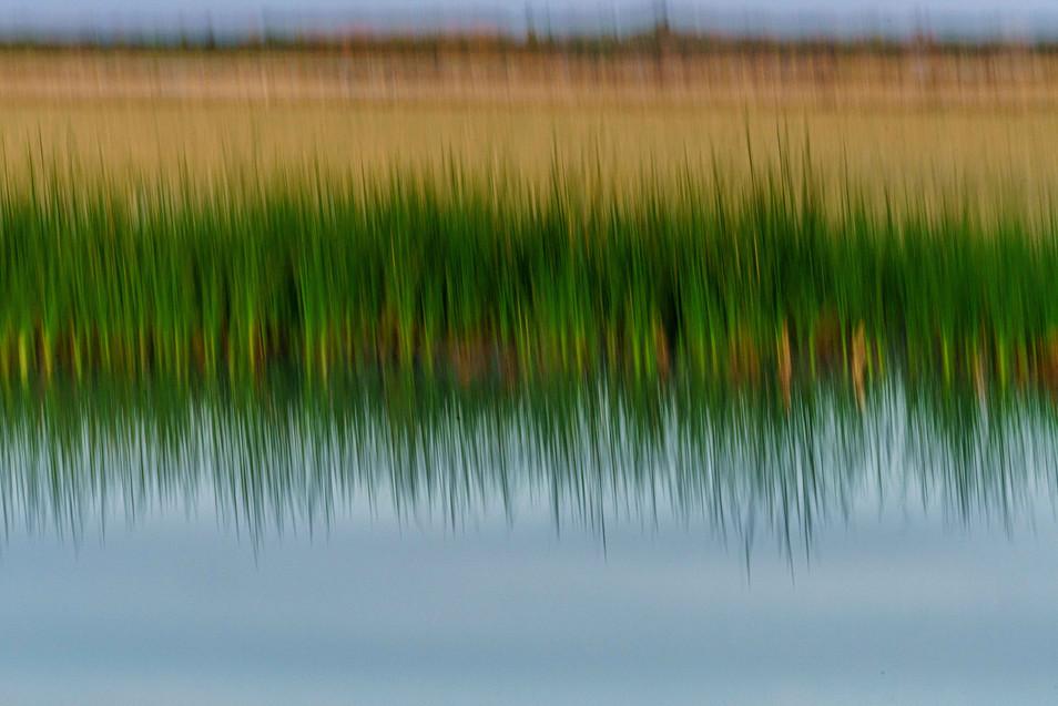 Refuge Reflections - Sonny Bono Refuge