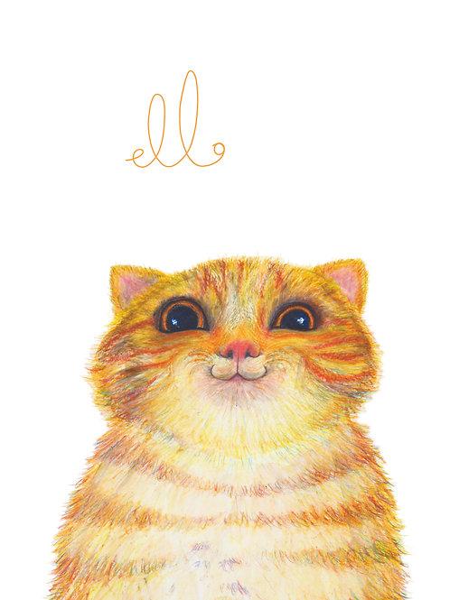Hello Tabby Cat!