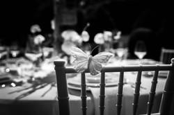 Schmetterlingdekoration Shirin Weddi