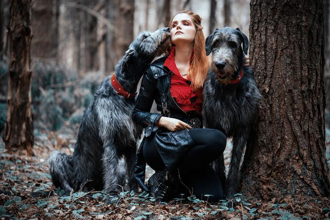 Ирландские волкодавы