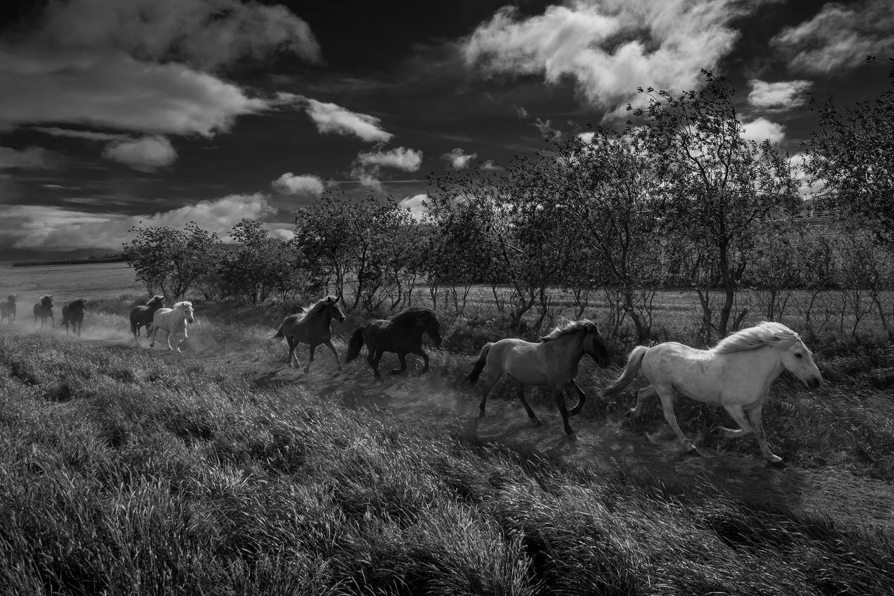 Island-Pferde 2019