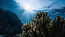 ocean-cdr.jpg
