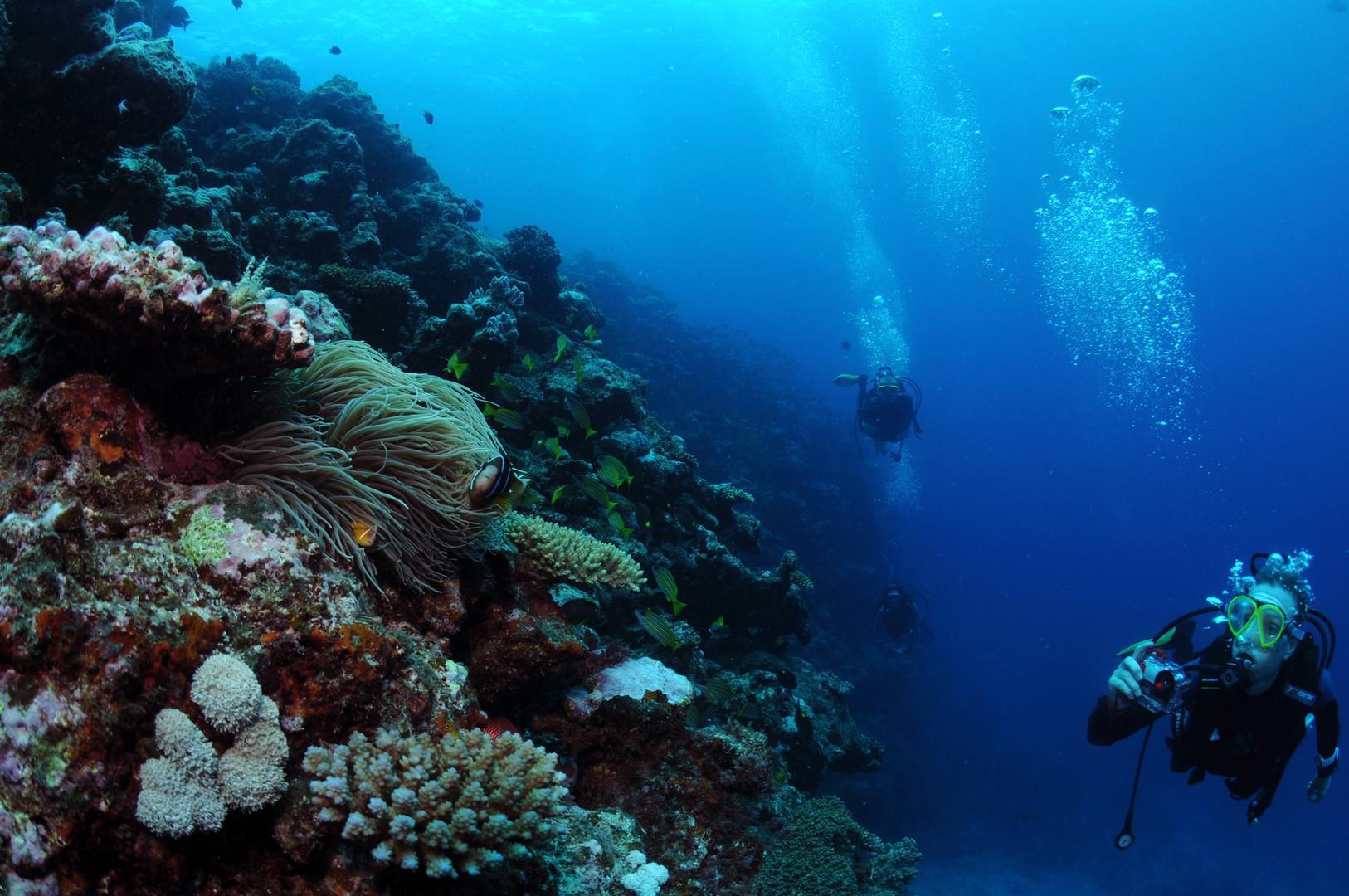 Banc de corail à Anjouan