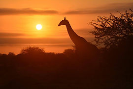 Kapama sunset.jpg