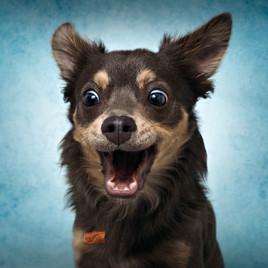 Wie Hunde lernen - Teil 1: Positive und Negative Verstärkung