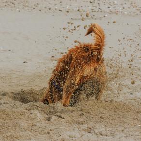 Umweltbelohnungen - So wird das Hobby unseres Hundes zum Verstärker