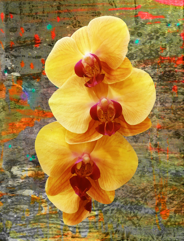 ORCHID INTENSE IN YELLOW