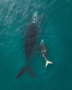 Baleias Franca Garopaba