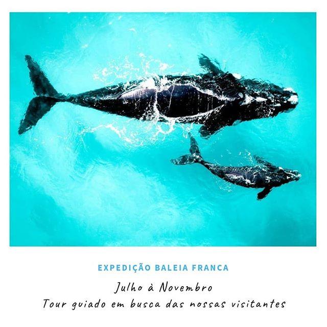 🐋 Expedição Baleia Franca