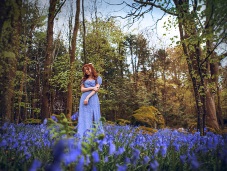 Magical Bluebell Forest