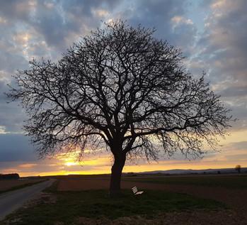 Baum - Symbolbild