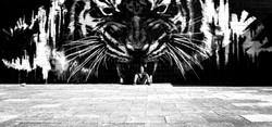 Con Men tiger.jpg