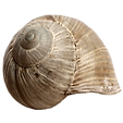Shell-PNG-Images.png