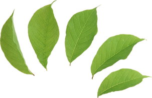 transparent-leaf-green-2.png