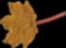 kisspng-maple-leaf-leaves-5acb3cf204ad31