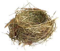 nest_PNG22.png