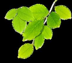 kisspng-nature-natural-environment-arbol