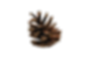 pine_cone_PNG13345.png