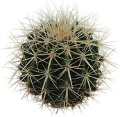 cactus-11.png