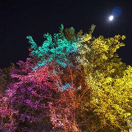 MaiLaThai_Moon_Tree_web.jpg