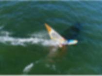speed freeride boards, silver bullet windtech wind