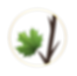 Last Leaf Genealogy-Icon.png