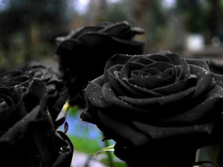 Drew Barrymore Grows a Black Rose