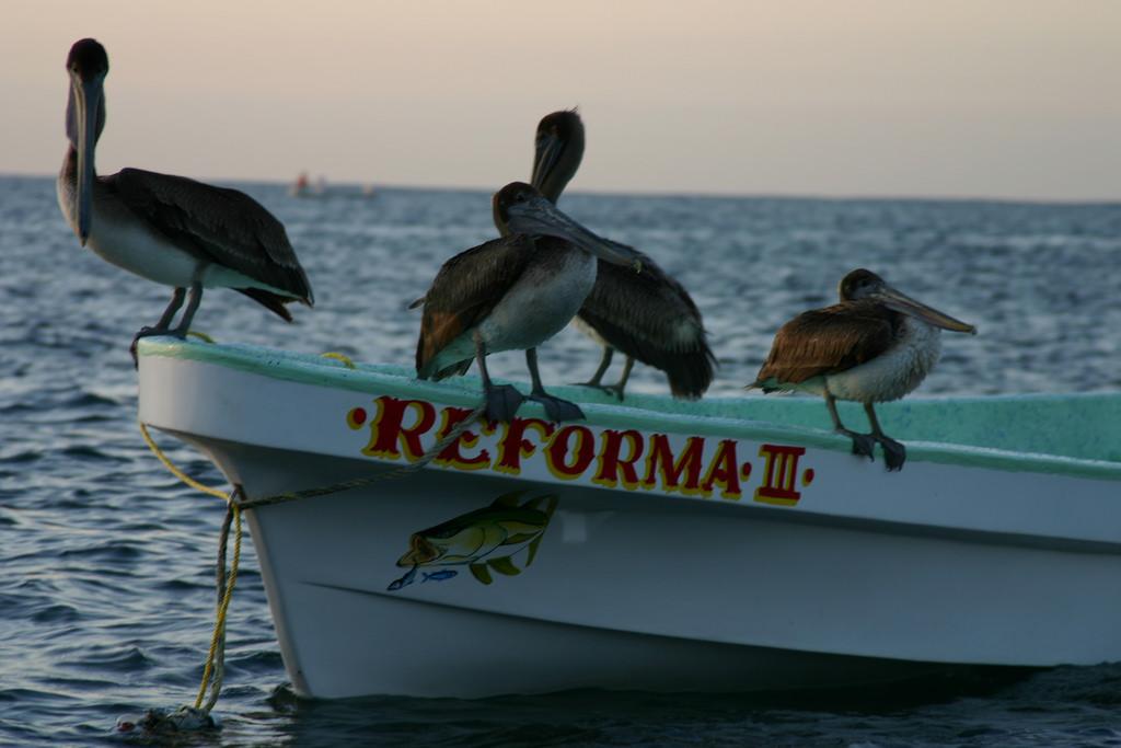 Pescadores en bahía principal.