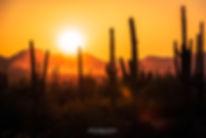 1350_SaguaroNP30.jpg