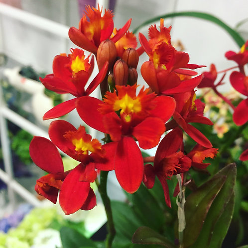 Southern Orchids