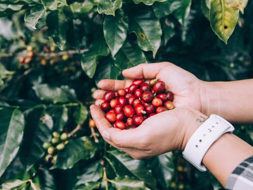 [Sustainability] Psychic Garden Organic Rainforest Coffee (Peru)