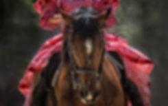horseback rides branson mo, horse riding