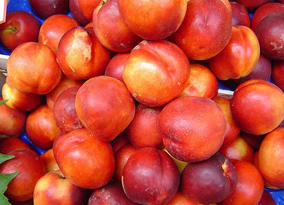 Red Gold Nectarine Tree