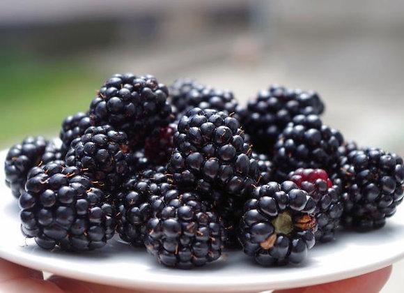 Brazos Blackberry