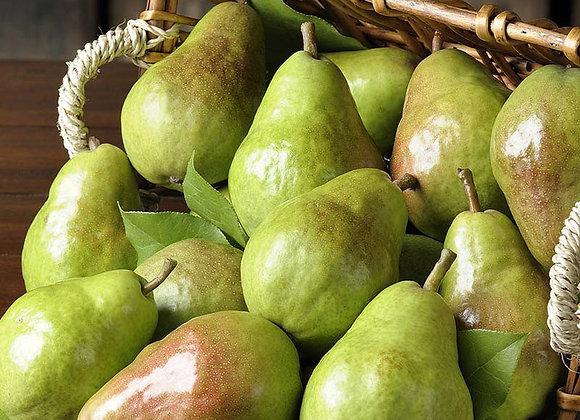 Barlett Pear Tree