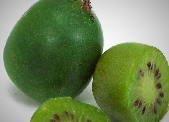 Issai Kiwi Plant