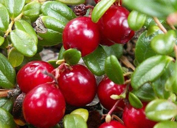 Steven's Cranberry