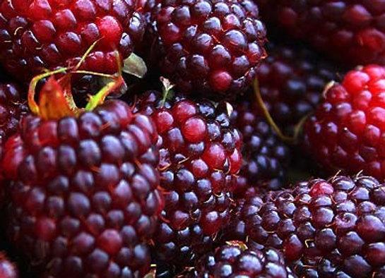 Brandywine Raspberry