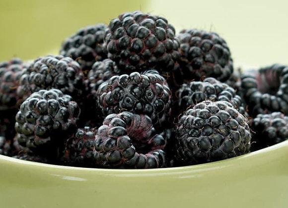 Munger Black Raspberry
