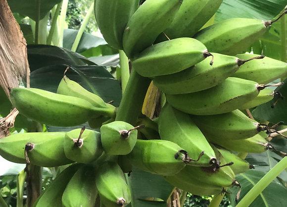 Apple Banana Tree