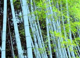 Blue Henon Bamboo (Running)