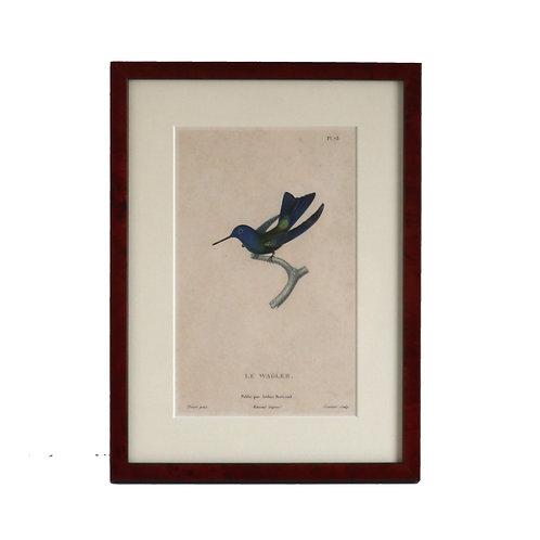 Le Wagler Bird