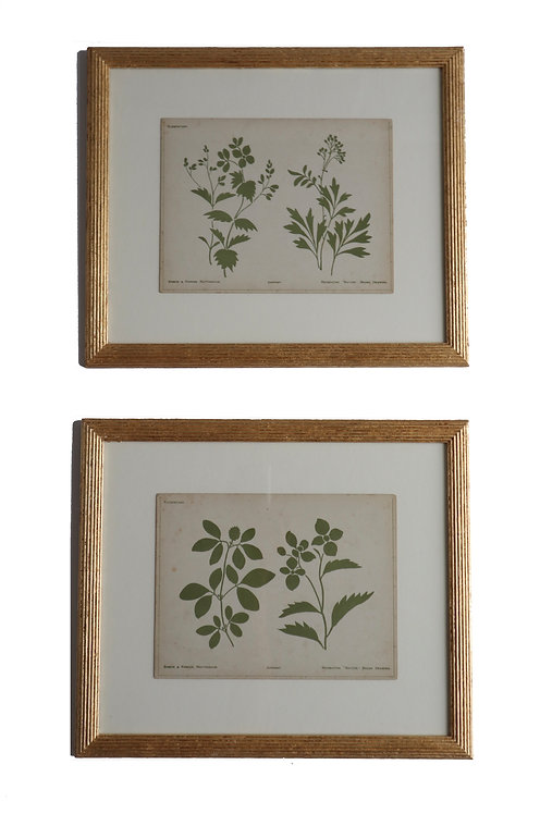 Set of two Green Nature Brush Drawings