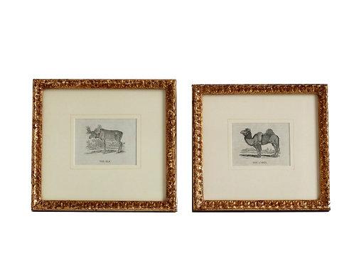 Set of Two Thomas Bewick Animal Prints 1820
