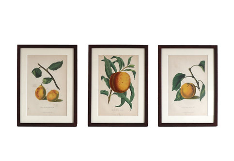 Set of Three Fruit Prints