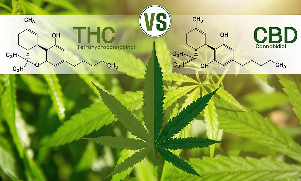 Cannabis of the formula CBD-THC.jpg