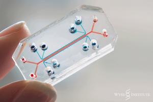 Poumon sur puce Source : Wyss Institute