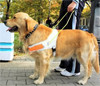 Dogs helping people with visual or mobility impairments