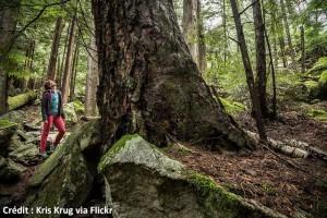 Le Shinrin-Yoku ou la nature comme médecine préventive